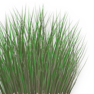 Nutgrass